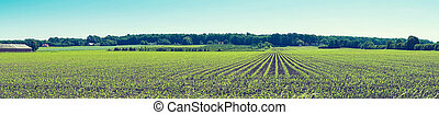 Agricultural field with crops on a row