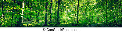 Forest in the spring