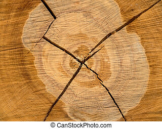 felled tree annual rings on tree grate - the annual rings of...
