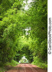 Road to tunnel bamboo trees - Dirt road to tunnel bamboo...