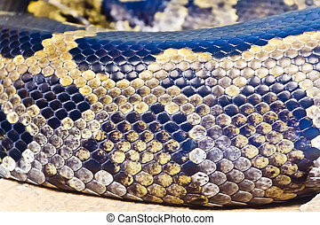 Photo of snake skin close up - Photo of real boa snake...