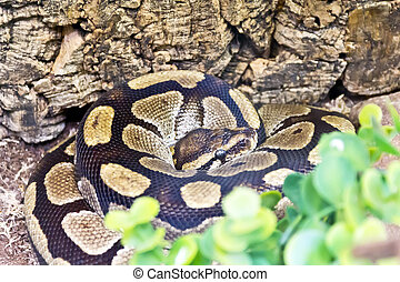 Photo of python snake in green - Photo of python head in...