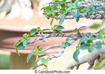 cerrado, Arriba, bonsai, rama, y, envuelto, por, control,...
