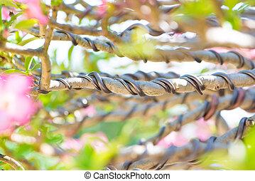 bonsai,  control, alambre, cerrado, Arriba, rama, envuelto
