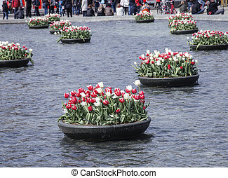 tulip flowerbeds in netherland, central square lifestyle...