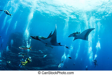Manta Ray - Picture shows a Manta Ray at Islas...