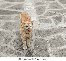 Cat standing on stone floor. - Red angry cat on stone floor...