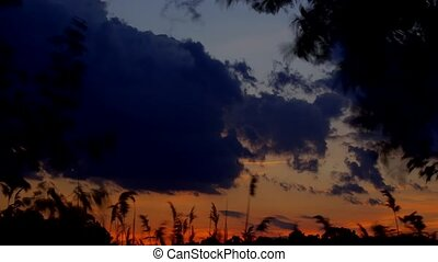 Reed against the sunset - Sunset or Sunrise. The reeds and...