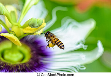 Bee flying over flowers - Bee are flying over the exotic...