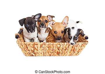 Basket of Litter of Cute Puppies