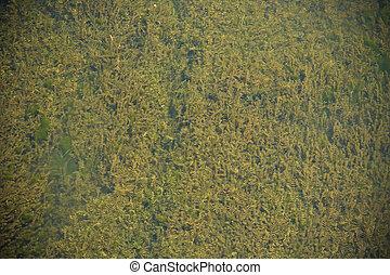 group of algae in rivers - A group of algae in rivers