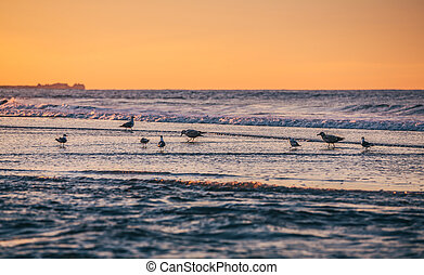 Atlantic Ocean coastline - Birds on the oceanfront Atlantic...
