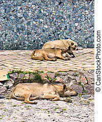 street dogs - Abandoned, street dogs sleeping on the road.
