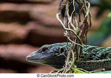 Emerald Tree Monitor (Varanus prasinus) at the Bioparc...