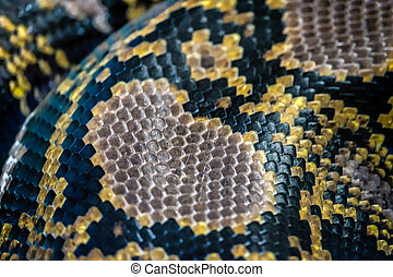 Reticulated Python (Python reticulatus) skin close up in the...