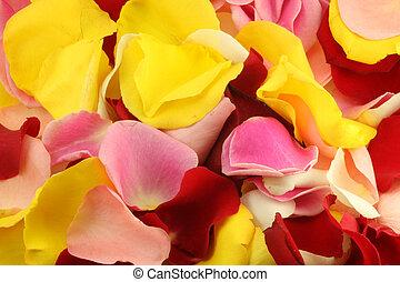 Petals of a rose.