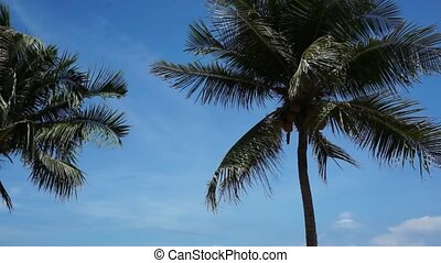 Silhouette of coconut palm tree in front of clear blue...