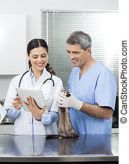 Doctor With Tablet Computer By Colleague Holding Weasel -...