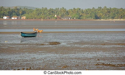 Dogs by shallow river sandbank