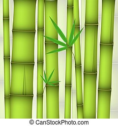 Background - green bamboo stems and twig with leaves
