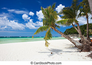 Tropical Paradise - Perfect tropical white sand beach in...