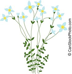 Flowers - Illustrated bluet wild flowers bunch