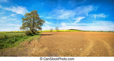Ploughed field with tree - Ploughed field with a tree yellow...