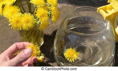 Putting dandelions into a teapot