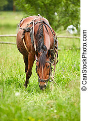 Horse grazing on a pasture - Brown horse grazing on a...