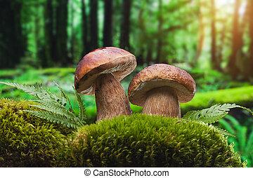 closeup of forest mushrooms - closeup of boletus mushroom in...