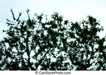 tree branches with green leaves against the sky