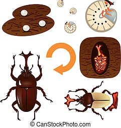 Growth cycle of the beetle - Vector illustrationOriginal...