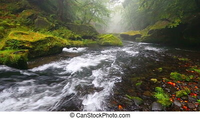river Kamenice in autumn, Bohemian Switzerland - foggy river...
