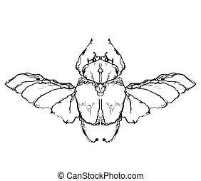 Hand drawn flies insect