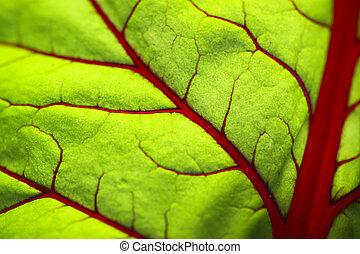 Translucent leaf.