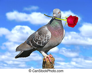 Pigeon. - Pigeon with red rose.