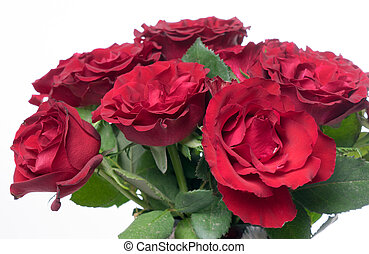 red Roses - red roses over a bright background
