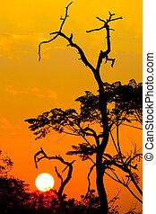 美麗, 黑色半面畫像, 太陽, 樹, 傍晚, 時間
