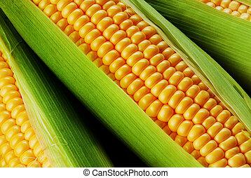 Getreide, Kolben,