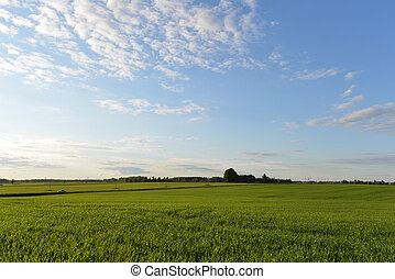 green meadow - spring green meadow and sky landscape