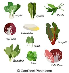 Salad ingredients Leafy vegetables icons set Organic and...
