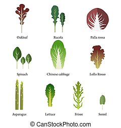 Set of salad bowl Leafy vegetables green salad Vector EPS 10...