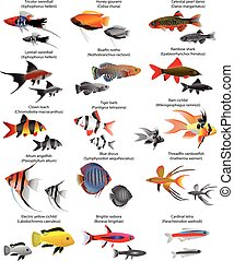 Freshwater fish - Collection of different species of...