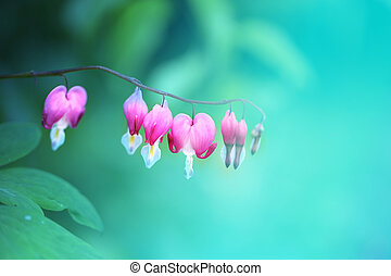 Photo pink flowers spindle tree - Photo of macro pink...