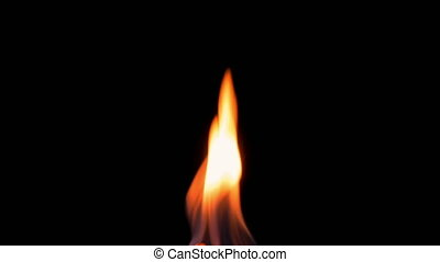 Natural burning fire flame on the black background Red and...
