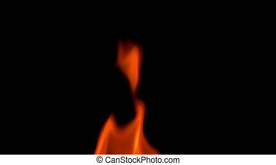 Natural burning fire flame on the black background. Red and...