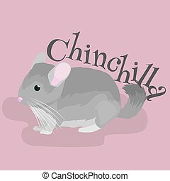 Pets, Gray chinchilla, domestic animals vector illustration...