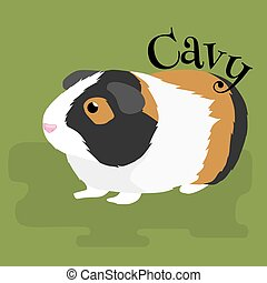 Happy Pets, home animals guinea pig on the white background