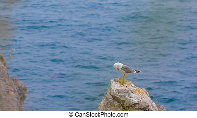 Seagull standing on a rock by the sea bird calm elegant and...