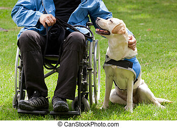 Labrador guide dog and his disabled owner on green grass